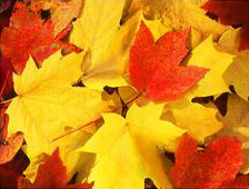 Fall / Holiday: Fall Leaves